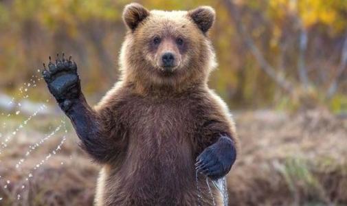Autostrada Lugoj – Deva: a picat negocierea cu Salini pe tunelurile pentru ursi. Pretentiile italienilor, considerate inacceptabile